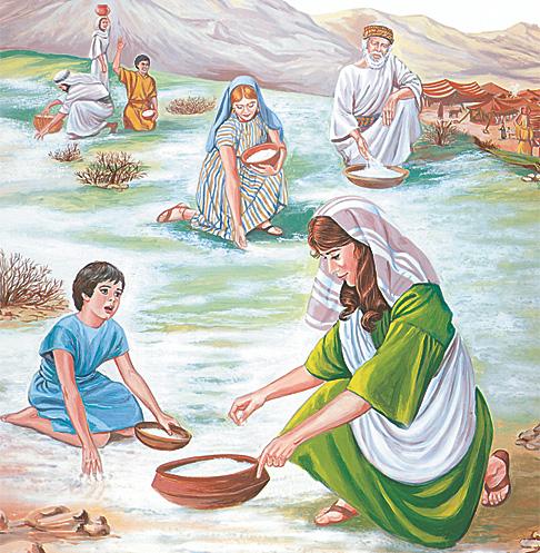 इस्राएलीहरू मन्न टिप्दै