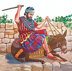 Balaami hariyo toggidi