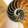 La vista del interior de la concha de un nautilo muestra su impresionante diseño