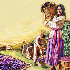 People harvesting grapes in Paradise