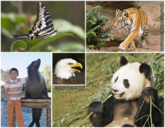 1. Alibangbang sa tropiko, 2. Bengal tiger, 3. Giant panda, 4.Bald eagle, 5.California sea lion