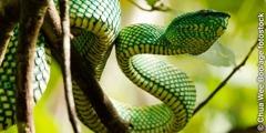 一条蛇在树上
