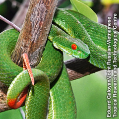 A snake wrapped around a tree branch