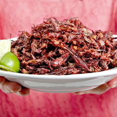 A plate of edible insects