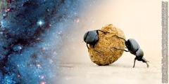 Två dyngbaggar rullar en dyngboll.