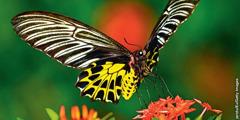 En sommerfugl