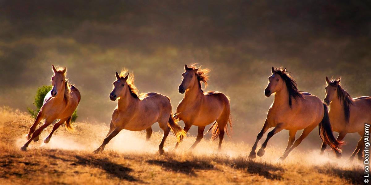 Las patas del caballo   ¿Casualidad o diseño?