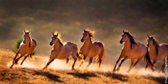 Kuda-kuda berderap