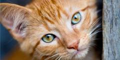 Een katje