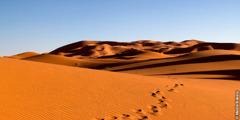 Ubugaragwa bwa Sahara