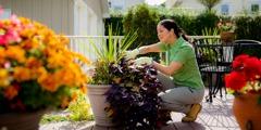 Деліна доглядає за квітами