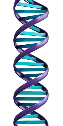 Molekul DNA menyerupai tangga berpilin yang panjang dengan anak tangga