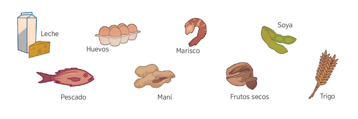 Leche, huevos, mariscos, soya, pescado, maní, frutos secos y trigo