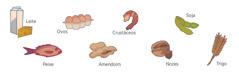 Leite, ovos, crustáceos, soja, peixe, amendoim, nozes e trigo