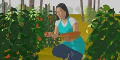 A woman picks fruit