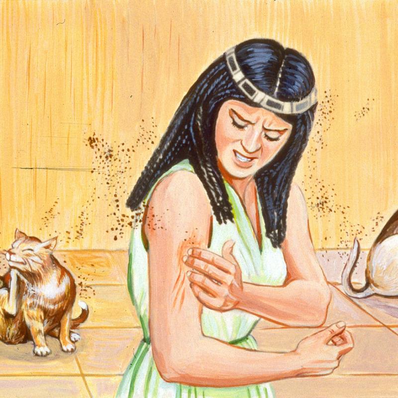 Durante a terceira praga, uma mulher é picada por mosquitos
