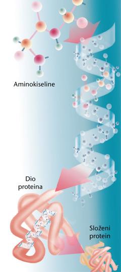 Dijelovi proteina