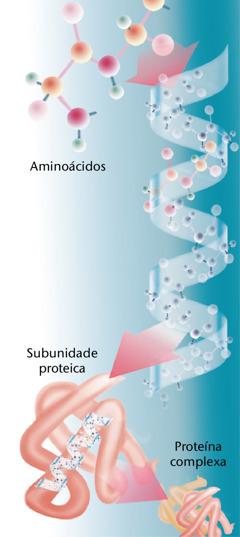 O dobramento de uma proteína típica