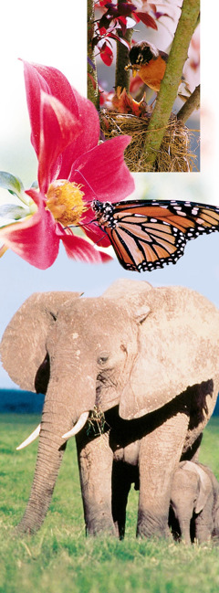 Birds, a flower, a butterfly, and elephants