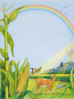 The sun shines on a corn field and a rainbow is in the sky