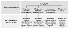 Mogya, nuhua ninyɛne titili nna ne, nee mogya nu ninyɛne ngyikyi ngyikyi