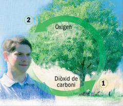 Els cicles del diòxid de carboni i de l'oxigen