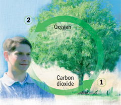 Carbon dioxide and oxygen cycles