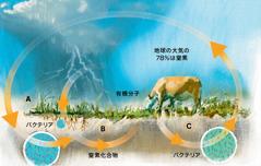 窒素の循環
