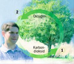Karbonets og oksygenets kretsløp