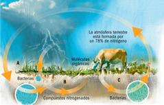El ciclo del nitrógeno