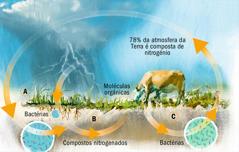 O ciclo do nitrogénio