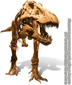 Skelet van een tyrannosaurus rex