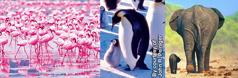 فیل، پنگوئن و فلامینگو با بچههایشان