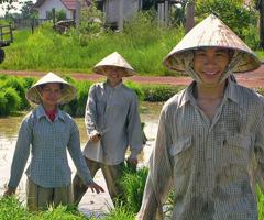 Nông dân làm việc trên cánh đồng lúa