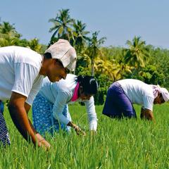 People work in a field
