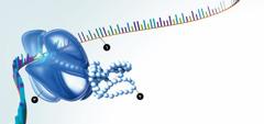 رنا، بروتينات، وجُسيمات ريبية
