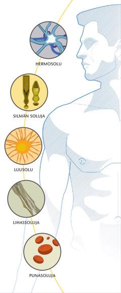 Hermosolu, silmän soluja, luusolu, lihassoluja, punasoluja
