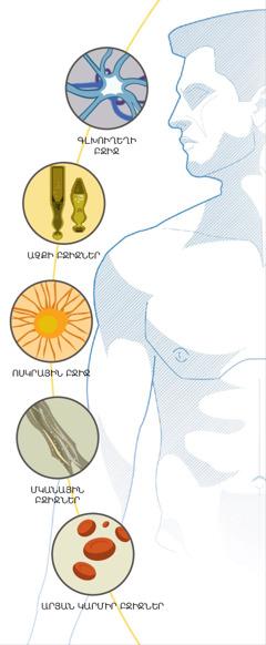 Գլխուղեղի բջիջ, աչքի բջիջներ, ոսկրային բջիջ, մկանային բջիջներ և արյան կարմիր բջիջներ