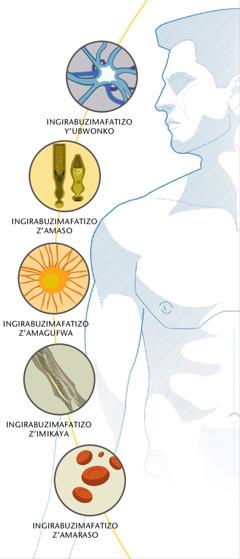 Ingirabuzimafatizo z'ubwonko, iz'amaso, iz'amagufwa, iz'imikaya n'iz'amaraso