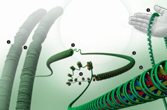 DNS in die kern van 'n sel verpak