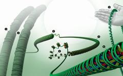 DNK u jezgri stanice