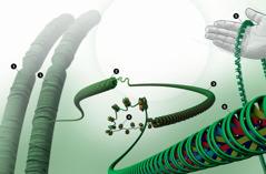 ADN empaqueté dans le noyau d'une cellule
