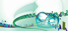 RNAによって読み取られるDNA