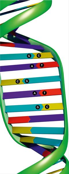 Eine DNA-Leiter
