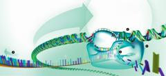 DNA-kedjan överförs till RNA