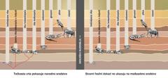 Grafički prikaz koji pokazuje navodno srodstvo nekih životinjskih vrsta