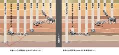 異なる数種類の動物の間にあるとされている関連性を示したグラフ