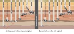 Grafic pe care sunt indicate presupusele legături dintre diverse specii de animale