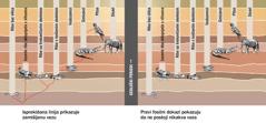 Grafikon koji prikazuje zamišljenu vezu između različitih vrsta životinja