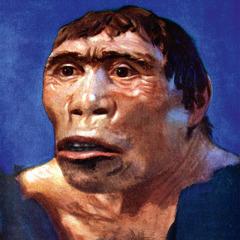 Një paraqitje artistike e tipareve të fytyrës, ngjyrës së lëkurës dhe sasisë së qimeve të një krijese të zhdukur